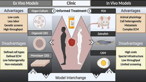 Using Improved Patient-Derived Tumor Models To Personalize Cancer Care