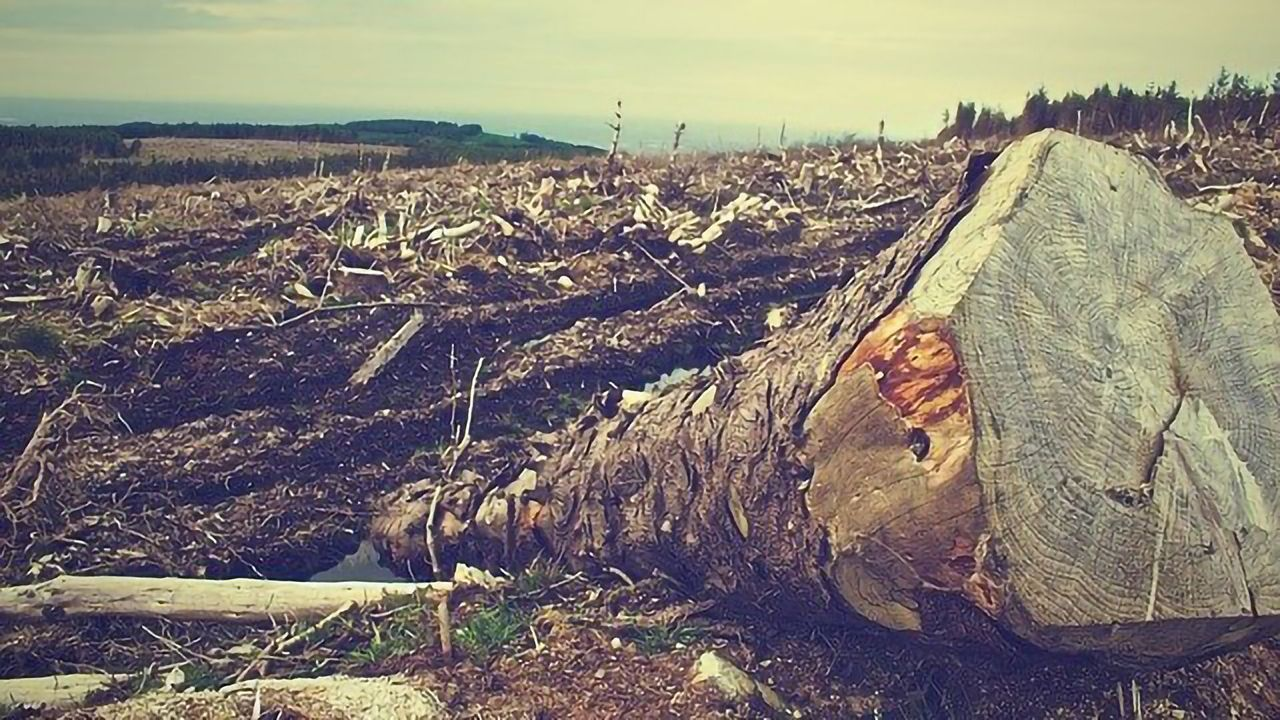 Could the Environmental Cost of Logging and Agriculture Be Eased by Lab-Grown Plant Material?