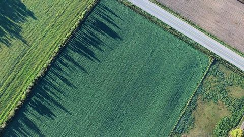 Biofuel Production Could Make Use of Abandoned Cropland