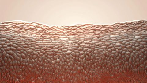 Detailed Map of the Skin Points to New Drug Targets for Inflammatory Diseases