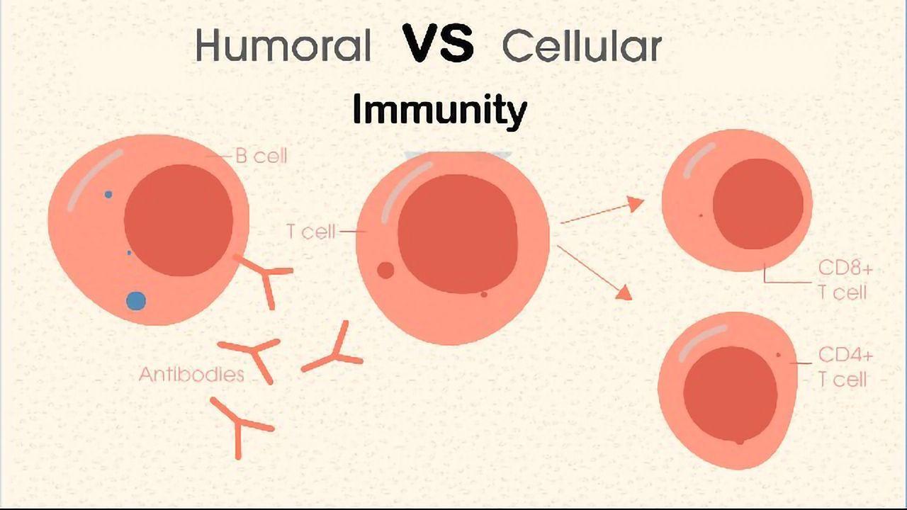 Humoral vs Cell-Mediated Immunity