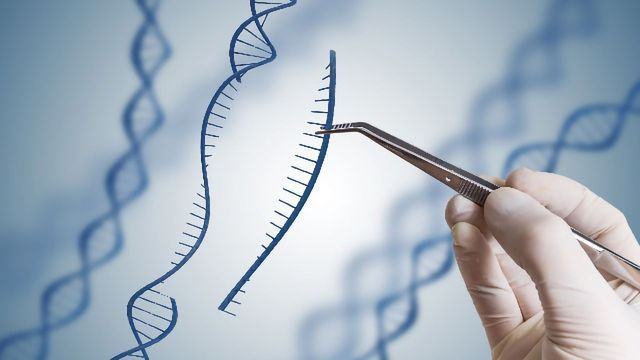 "Gene-Editing ""Branches Out"" With Engineered Variant of CRISPR-Cas9"