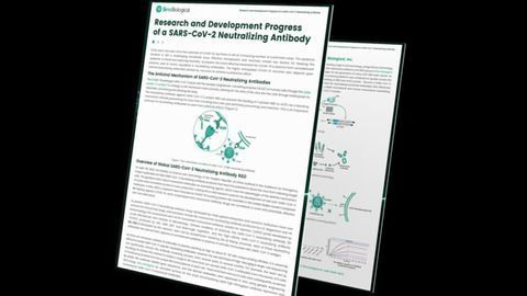 SARS-CoV-2 Neutralizing Antibody Research and Development