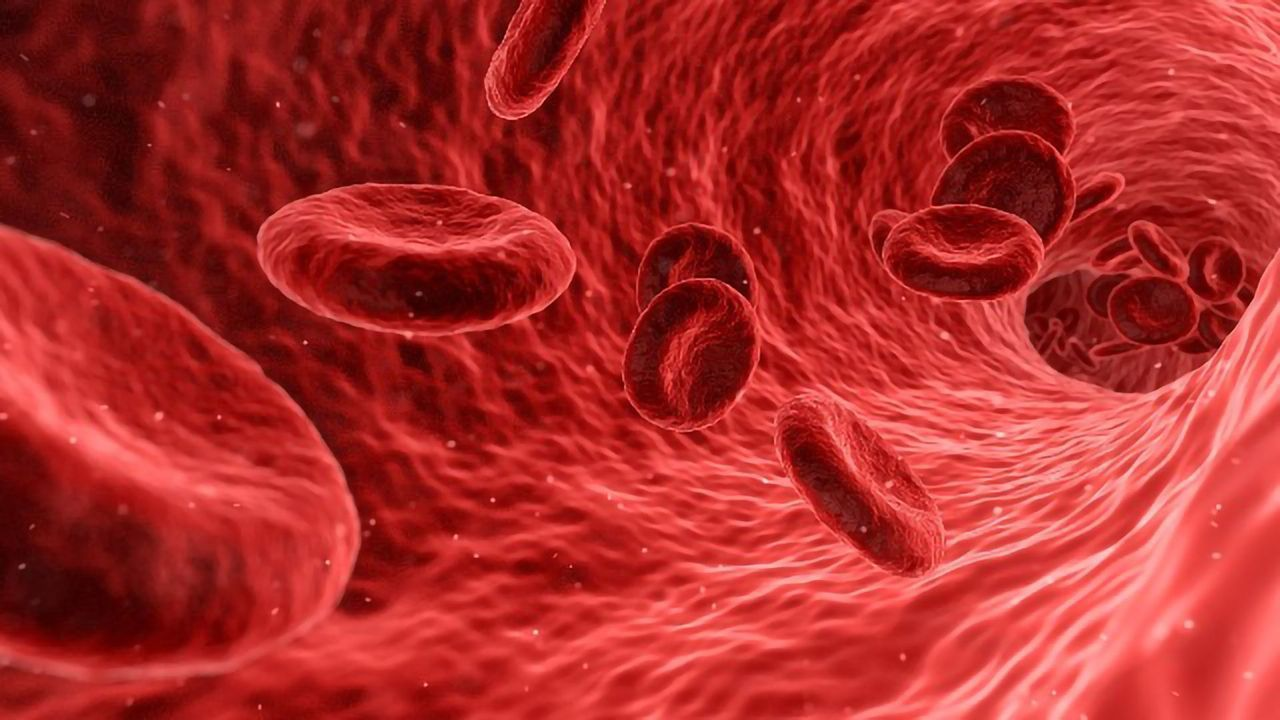 How Do Blood Stem Cells Maintain Their Ability To Self-Renew?