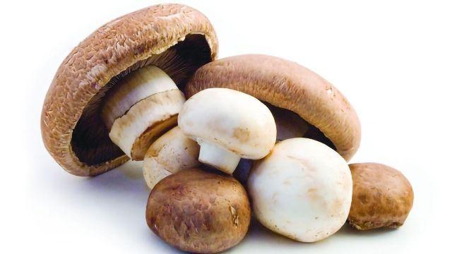A Mushroom a Day Keeps the Doctor Away?