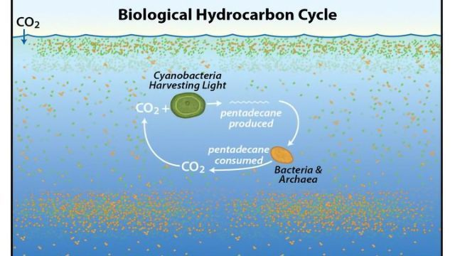 Immense Hydrocarbon Cycle Discovered in the World's Oceans