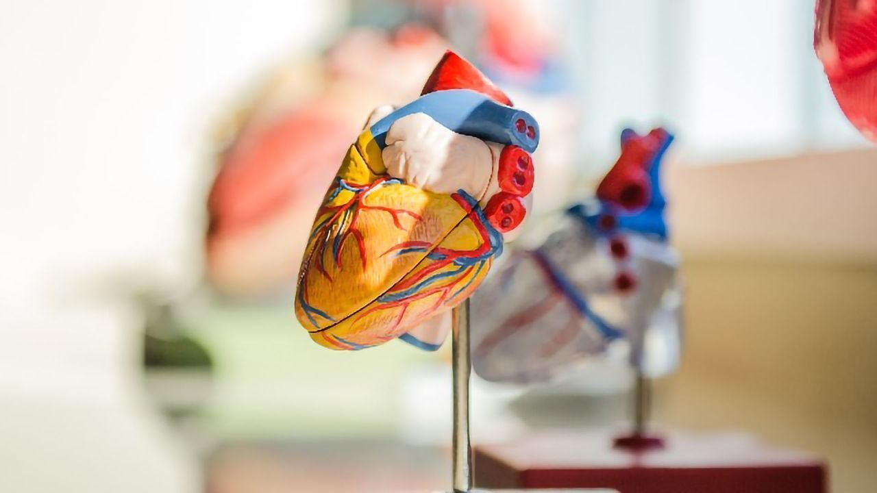 Iron Release in Response to Stress May Contribute to Heart Failure