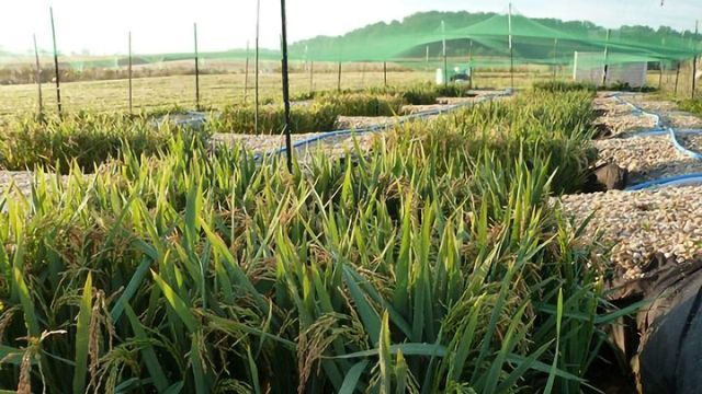 Some Food Contamination Starts During Growth