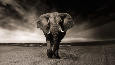 Investigating How Elephants Evolved To Become Resistant to Cancer
