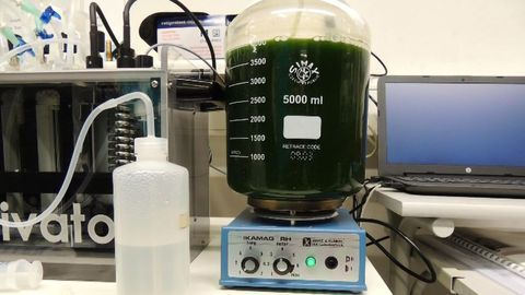 Food Supplement Pigment Sourced From Microalgae