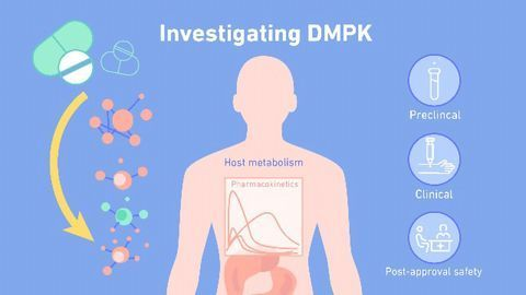 What Is DMPK (Drug Metabolism and Pharmacokinetics)?