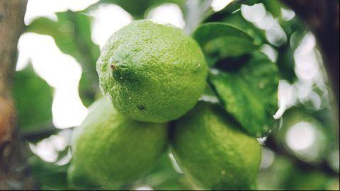 Peptide Prevents and Treats Killer Citrus Disease