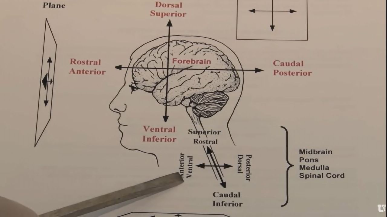 Orientation: The Planes of the Brain