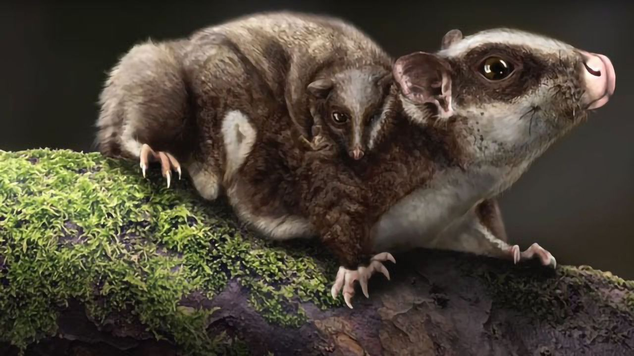 Fossilized Glider Takes the Origin of Mammals Back to the Triassic