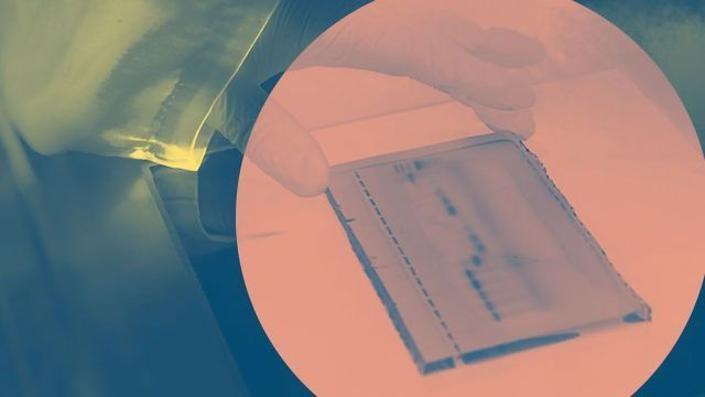 An Introduction to PCR