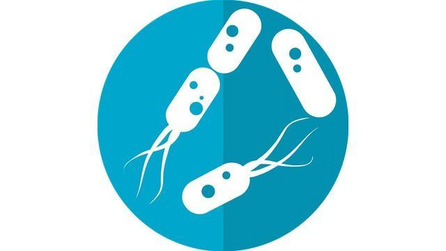 Understanding How Carcinogenic Bacteria Find Their Targets