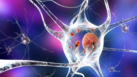 Function of Mysterious Parkinson's Protein Finally Revealed