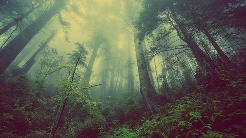 Pine Scent and Ozone Create Super Source of Particulate Emissions