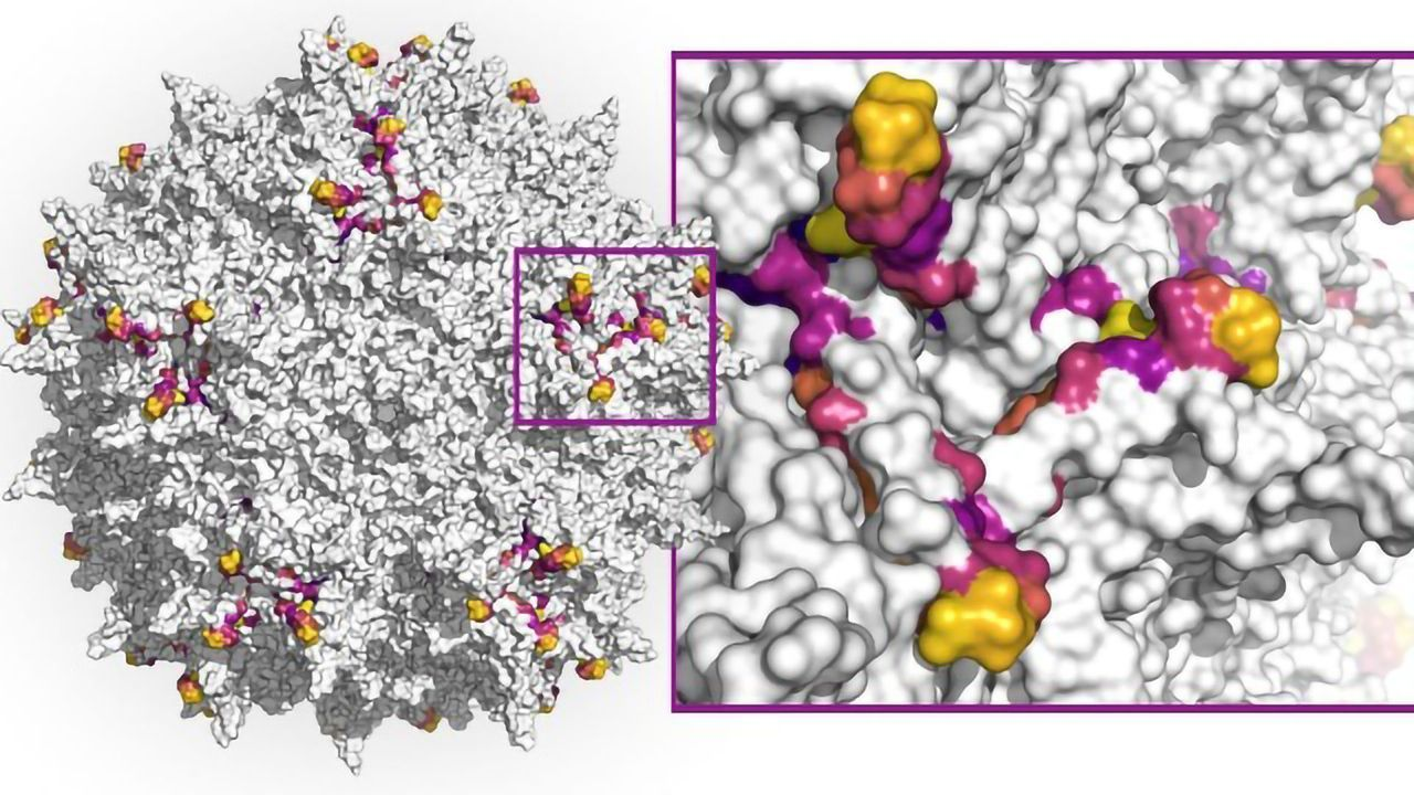 Using Machine Learning To Create Better Gene Therapies