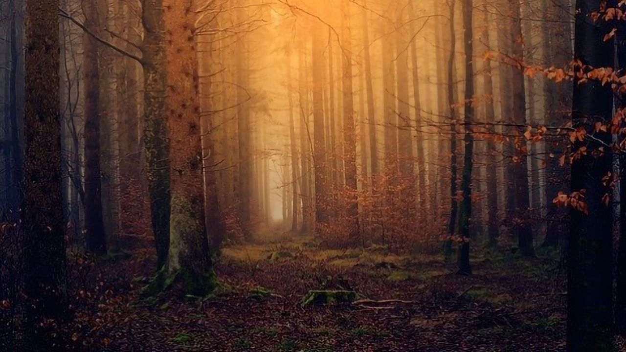 Some Forests May Actually Add to Global Warming