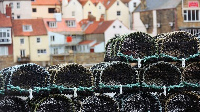 Long-Term Benefits for Managing Crab and Lobster Catches