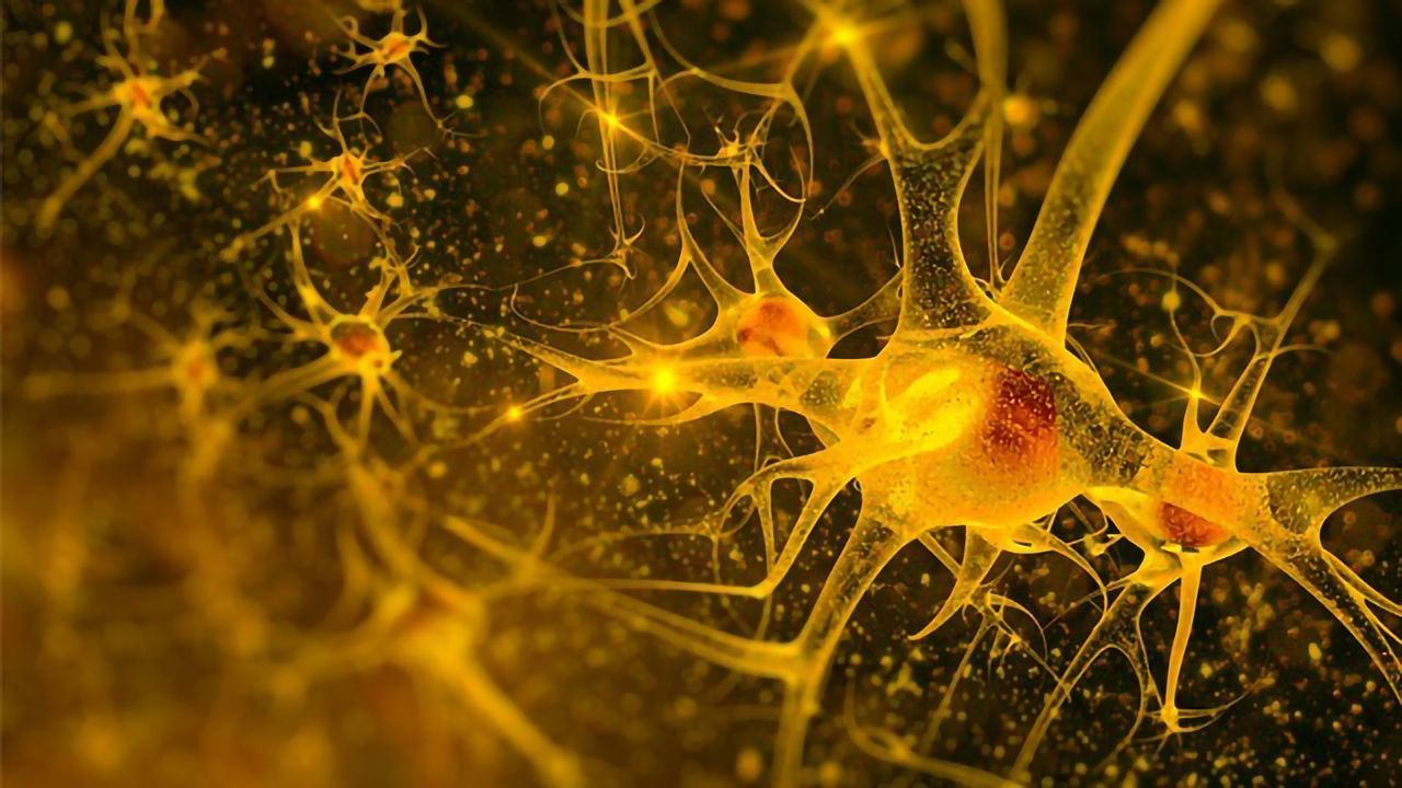 Lack of Oxygen Makes Nerve Cells Grow