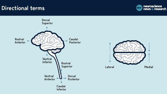 Navigating the Brain: A Cheat Sheet