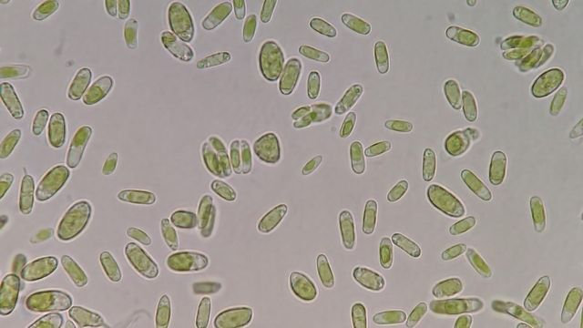 Bacteria and Algae Hitch a Ride in Clouds