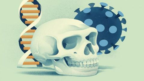 Neanderthal Gene Variants Both Increase and Decrease COVID-19 Risk