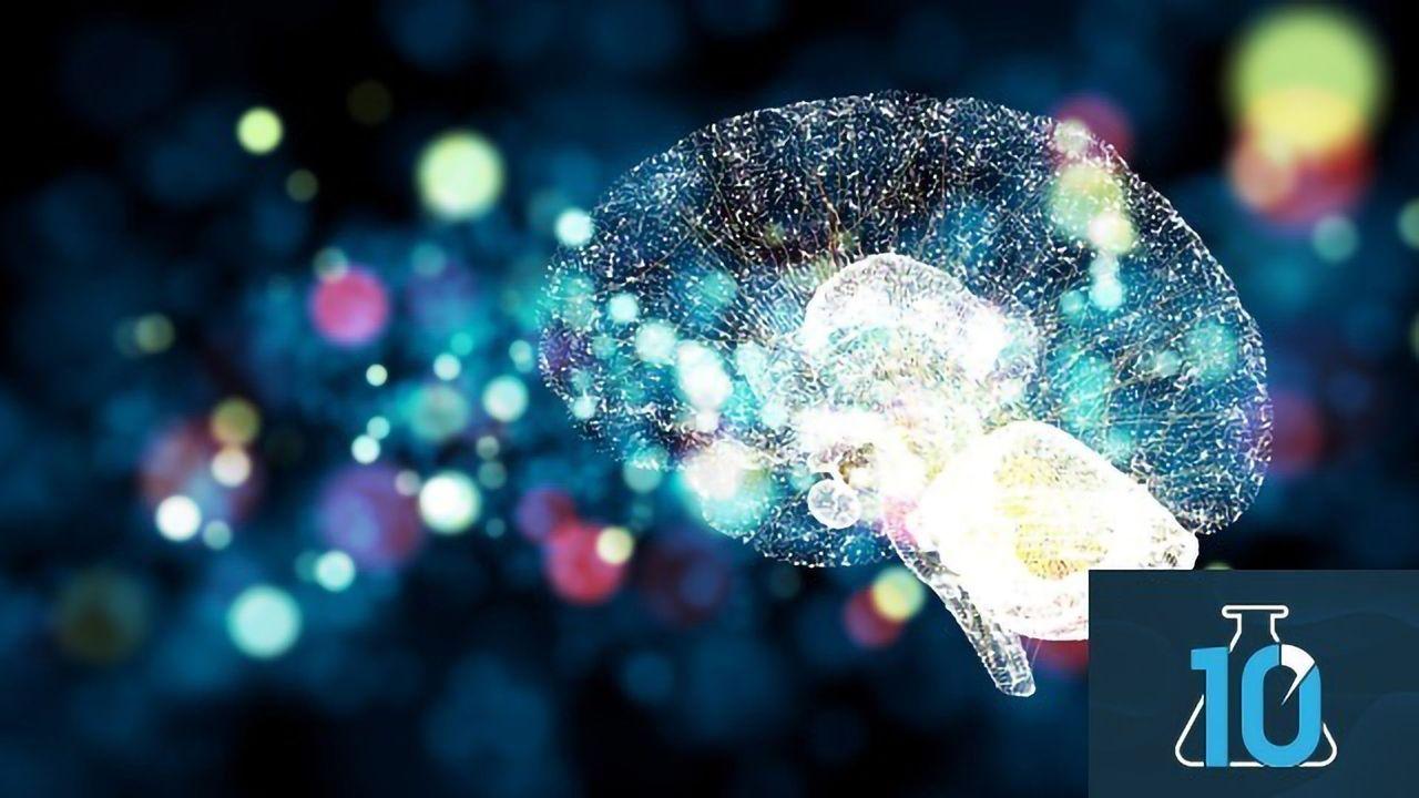 What Is Neuroplasticity? With Dr Michael Merzenich