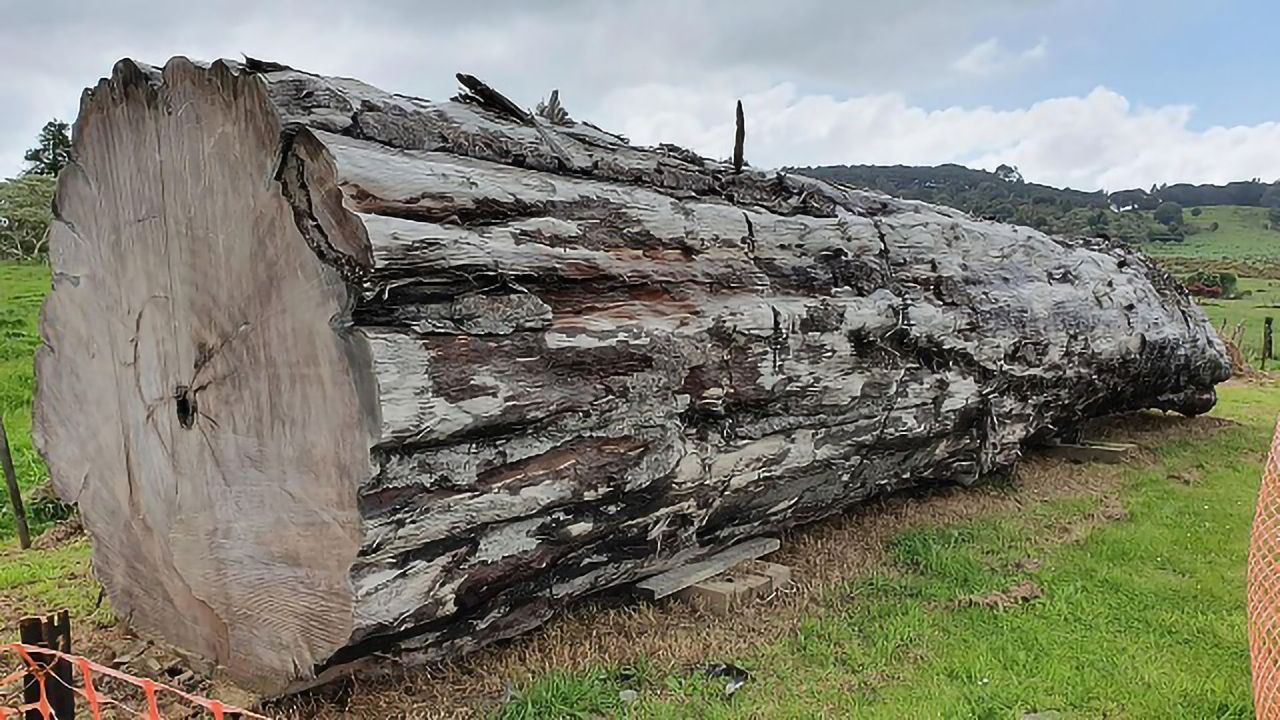 Ancient Trees Chart Last Reversal of Earth's Magnetic Field