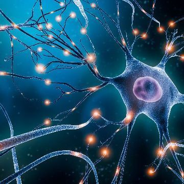 Neuron-Glia Network Could Help Boost Memory Formation