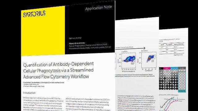 Achieve Robust Quantification of Antibody-Dependent Cellular Phagocytosis