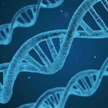 64 Human Genomes Sequenced as a New Reference for Genetic Variation