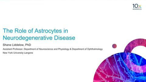 The Role of Astrocytes in Neurodegenerative Disease