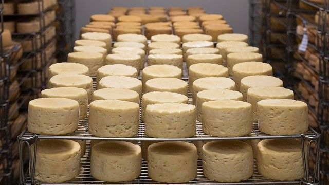 Taking the Guesswork Out of Cheese Production With Science