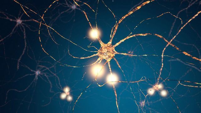 Glial Cell Discovery Could Point the Way to Motor Neuron Disease Therapies
