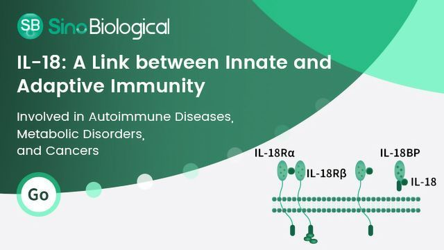 IL-18: A Link between Innate and Adaptive Immunities