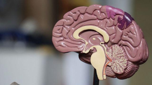Drug for Deadly Brain Disease Tested Using Human Cerebral Organoids