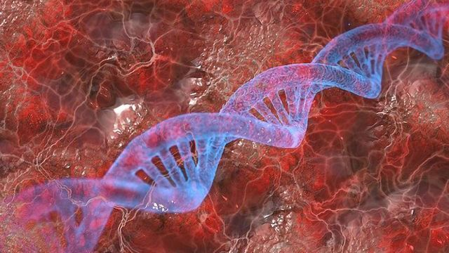 Protein Protects Telomeres and Promotes Proliferation in Cancer Cells