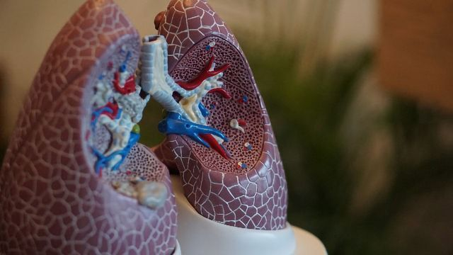 Study Reveals How a Critical Part of Lung Forms at the Cellular Level