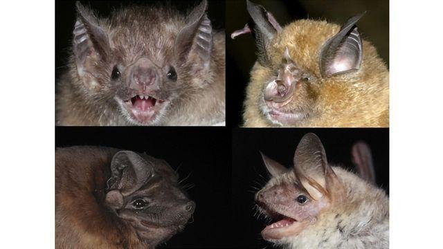 First Epigenetic Clock for Bats