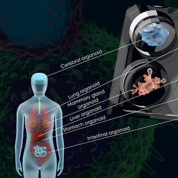 用有机体模型探索人类生物学和疾病