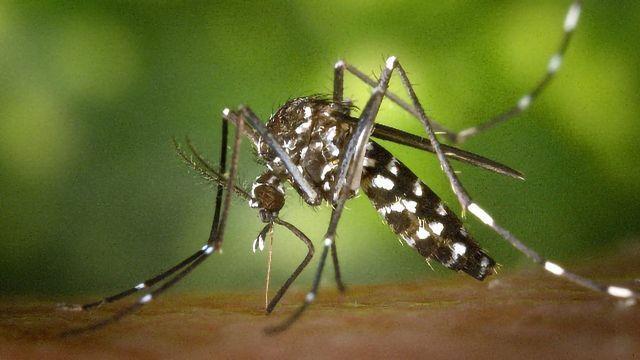 Custom Proteins Developed To Facilitate Malaria Diagnostics Development