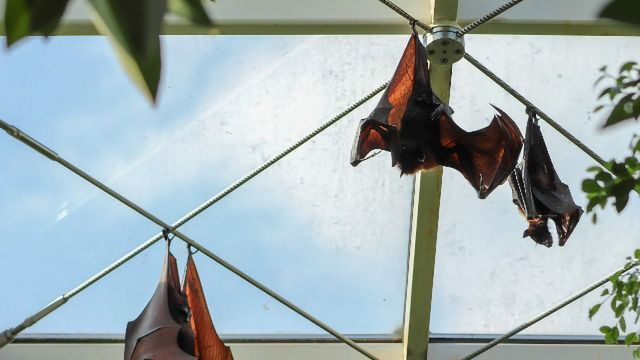 SARS-CoV-2 Jumped From Bats to Humans Without Much Change