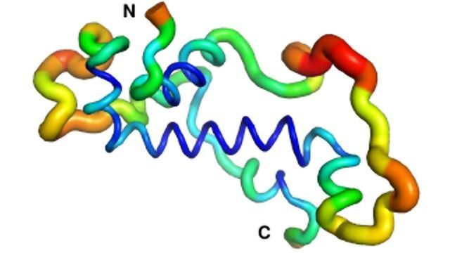 How Evolution Forms the Structure and Function of a Newly Emerged Protein
