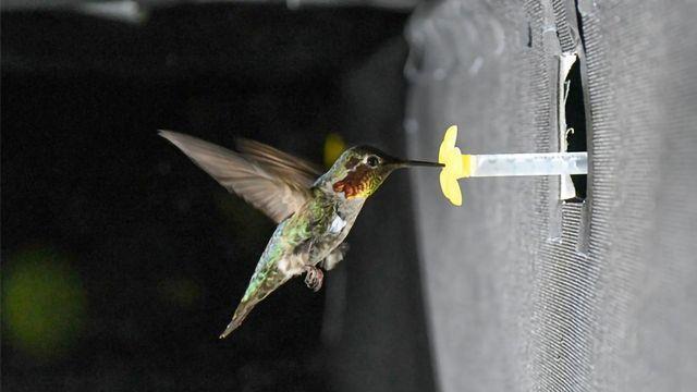 超过2000麦克风有助于发现蜂鸟嗡嗡声