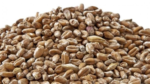 Maltsters Are Missing a Nutritional Trick