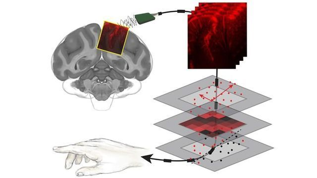 Reading Minds With Ultrasound