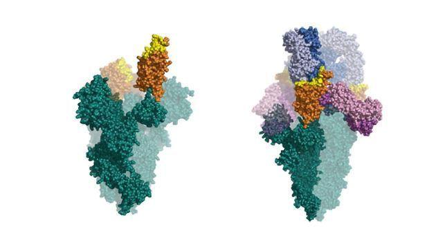 IONTAS Identifies Novel SARS-CoV-2 Neutralising Antibodies